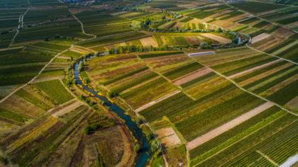 vineyards-in-dalmatia