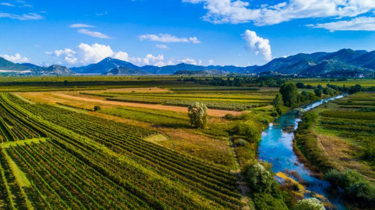 dalmatian-vineyards