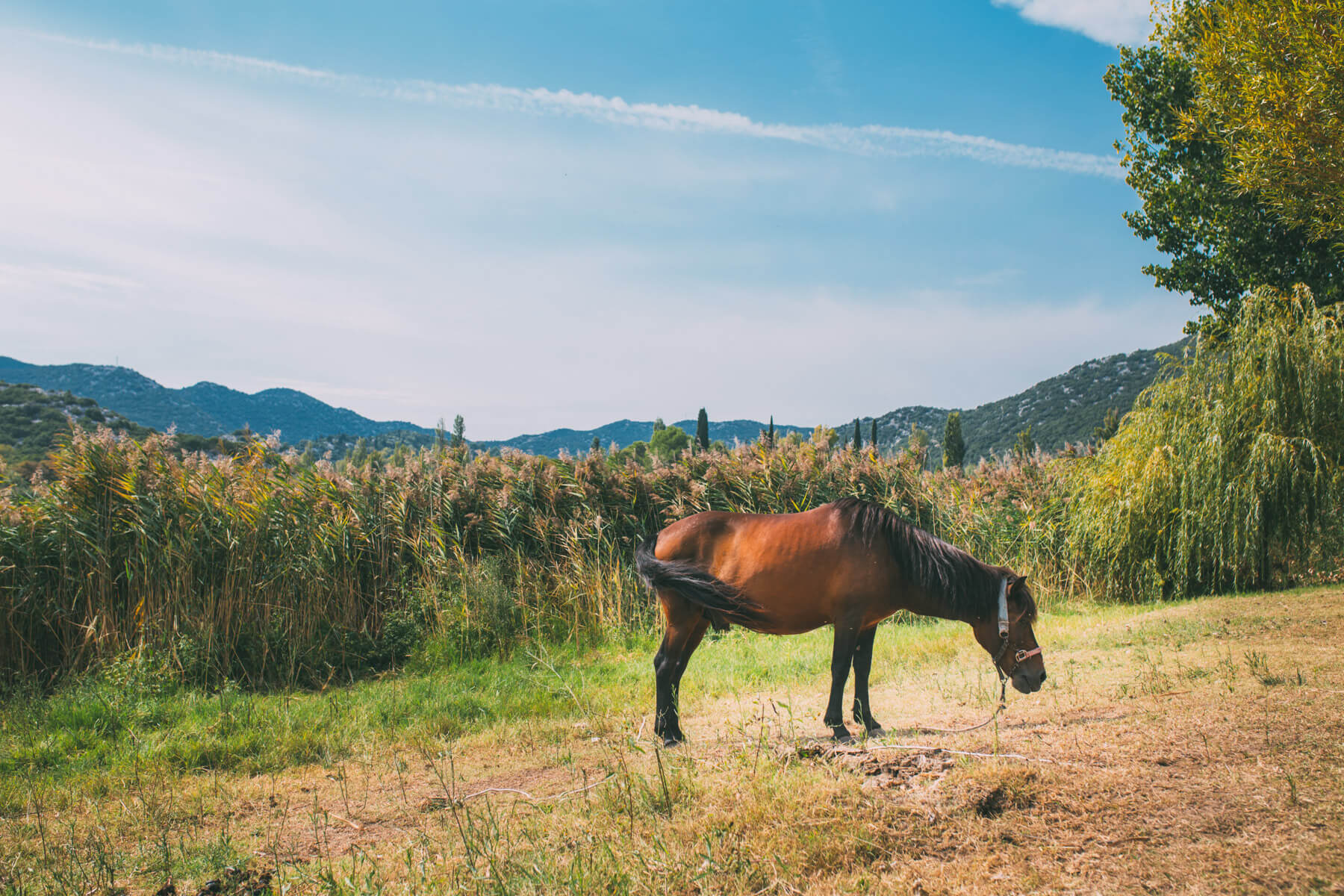 horse-on-bacina-lakes